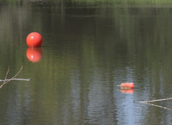 floating buoys